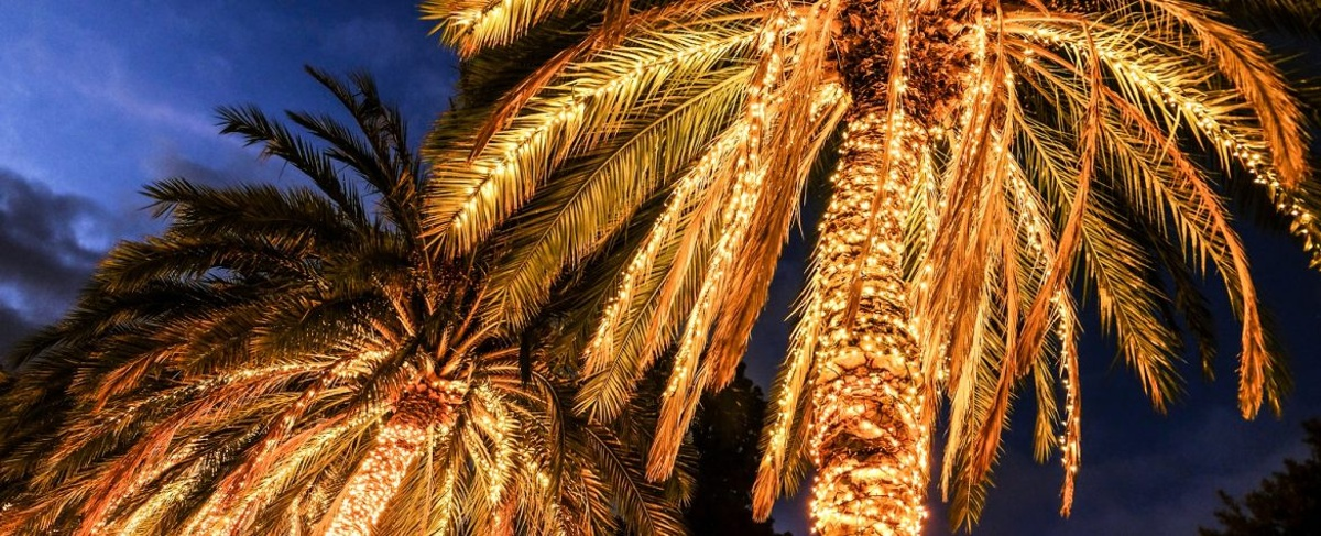 palm trees decorated with christmas lights