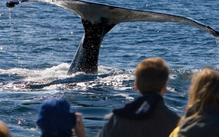 Here's why you must attend the Santa Barbara Whale Festival